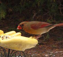 I'm so tiny, I am eating like a bird! by MarianBendeth