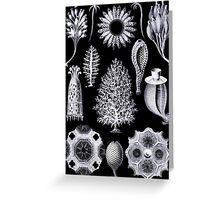 Microscopic Sponge Illustration Greeting Card