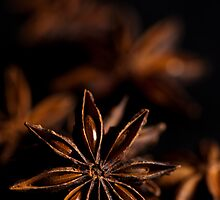 Star Anise Study by Anne Gilbert
