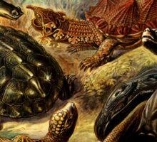 Land and Sea Turtles Sticker