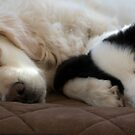 """""""Sleepy Time"""" by Amy Collinson"""
