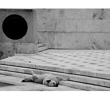 Athens Sleeping Dog #1 Photographic Print