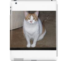 OUR FRIENDS CAT MOLLY WAITING BEHIND THE SCREEN DOOR iPad Case/Skin