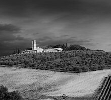 Hilltop Vineyard in Tuscany by JimBremer