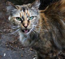 Wild Cat by Greendrainpipe
