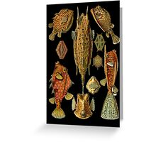 Fishes on Black Greeting Card