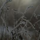 Snow Grass by Sarah Tweedie