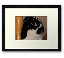Winnie Framed Print