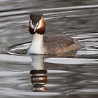 Great Crested Grebe by Gill Langridge
