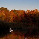 Swans and Sunrise by Dave Bledsoe