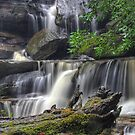 Fallen Tree at Somersby Falls by Mike Salway