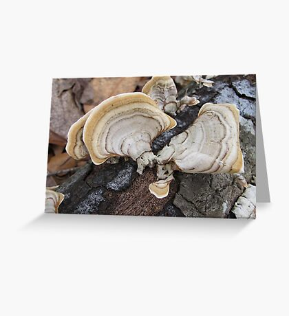 Shelf Fungus on Oak Greeting Card