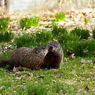 Groundhog Love by Dave Bledsoe