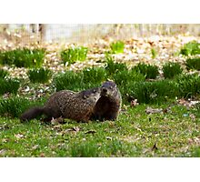 Groundhog Love Photographic Print