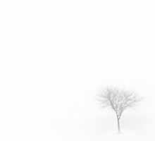 Little Foggy Tree by Ryan Smith