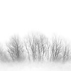 Fogged Family Trees by Ryan Smith