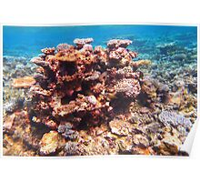 beautiful corals Poster