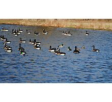 The Gathering of Waterfowl Photographic Print
