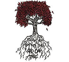 Follow You Down To The Red Oak Tree Photographic Print