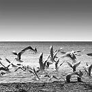 seagulls on takeoff by guido nardacci
