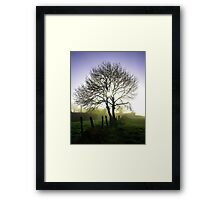 Tall tree in Ireland Framed Print
