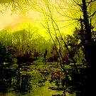 Millers Pond in a Mellow Yellow by qshaq