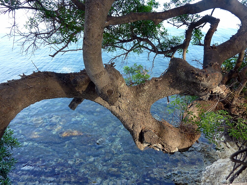Branching Out by Fara