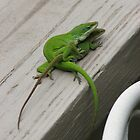 Anolis Mating - Close Up - Love Can&#x27;t Wait by JeffeeArt4u