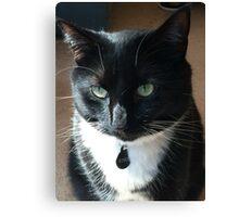 Rosco - the rescue kitty Canvas Print