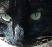 Rosco - the rescue kitty Sticker