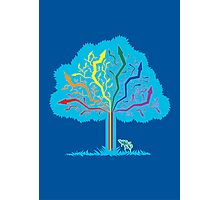 ARROW TREE Photographic Print