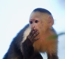 """Young Capuchin Ponders - """"Am I in Trouble?"""" - Tortuguero National Park by Stephen Stephen"""