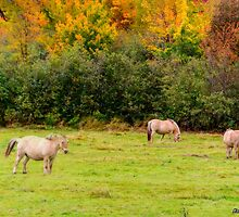 Horses Enjoying a Beautiful Autumn Day by kenmo