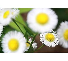 Cute White and Yellow Flowers Photographic Print