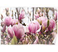 Magnolia Garden Poster