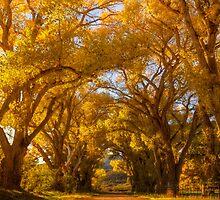 Tree Tunnel by Bob Larson