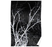 The Dark Naked Presence of Trees in Winter Poster