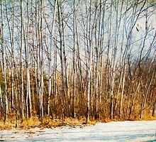 Winter Aspens in the Park by KBritt