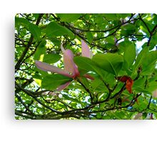 Surrounded By Magnolia Leaves Canvas Print
