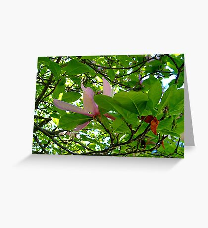 Surrounded By Magnolia Leaves Greeting Card