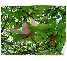 Surrounded By Magnolia Leaves Poster