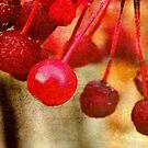 Cherry Berries!!! © by Dawn Becker