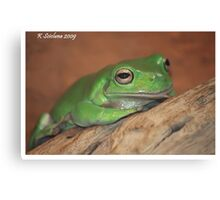 lazy froggy Canvas Print