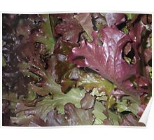 Red Oakleaf Poster
