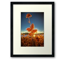 Spiked Sunset Framed Print