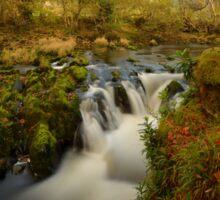 Autumn - River Dovey Sticker