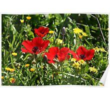 Happy Poppies Poster
