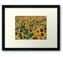 Vintage Sunflower painting art  Framed Print
