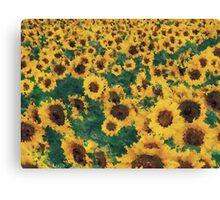 Vintage Sunflower painting art  Canvas Print