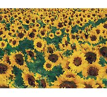Vintage Sunflower painting art  Photographic Print